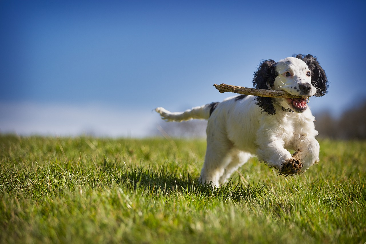 How To Adopt A New Dog - Factors To Take Into Consideration