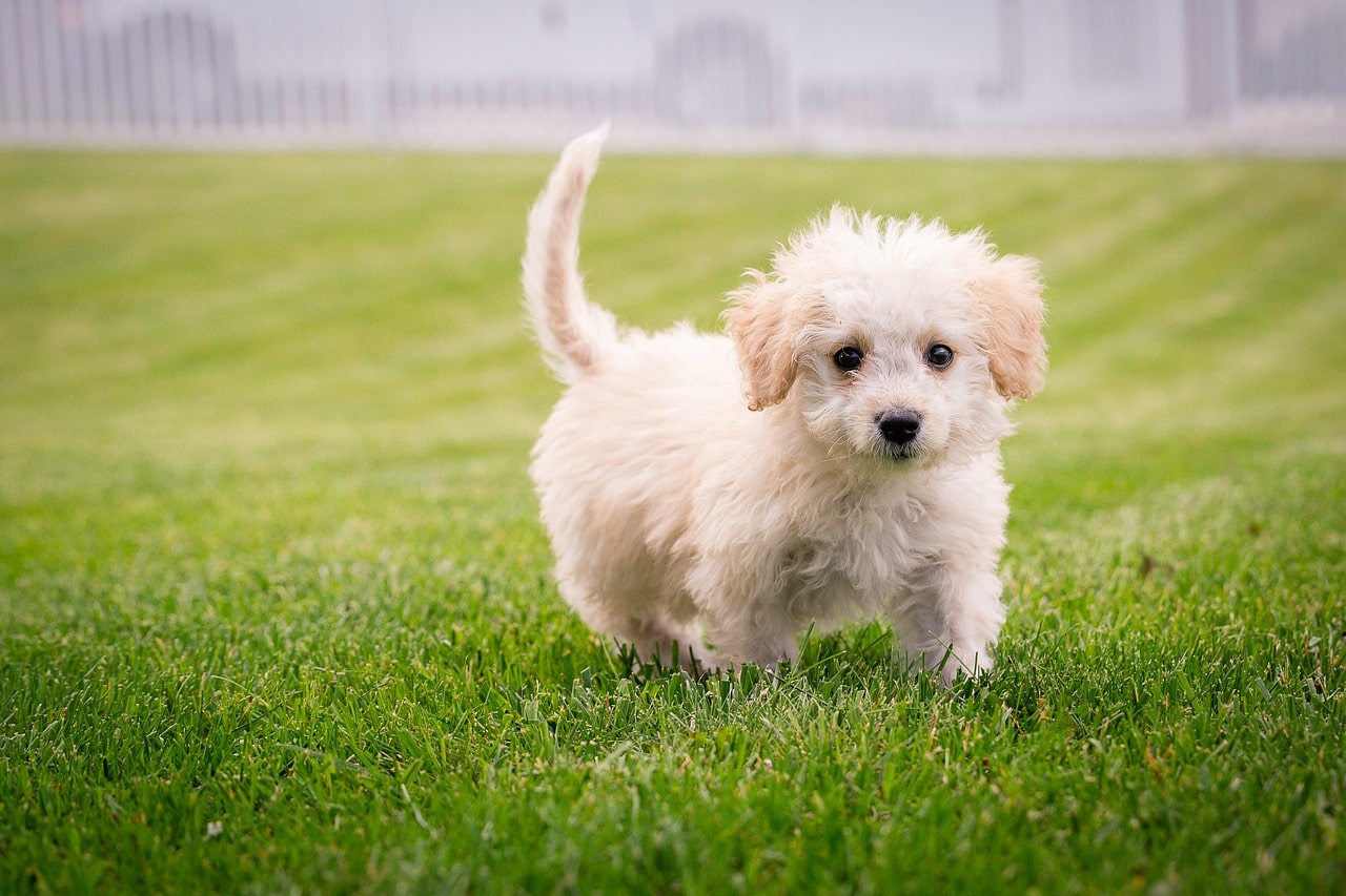 5 Tips For Training A Puppy