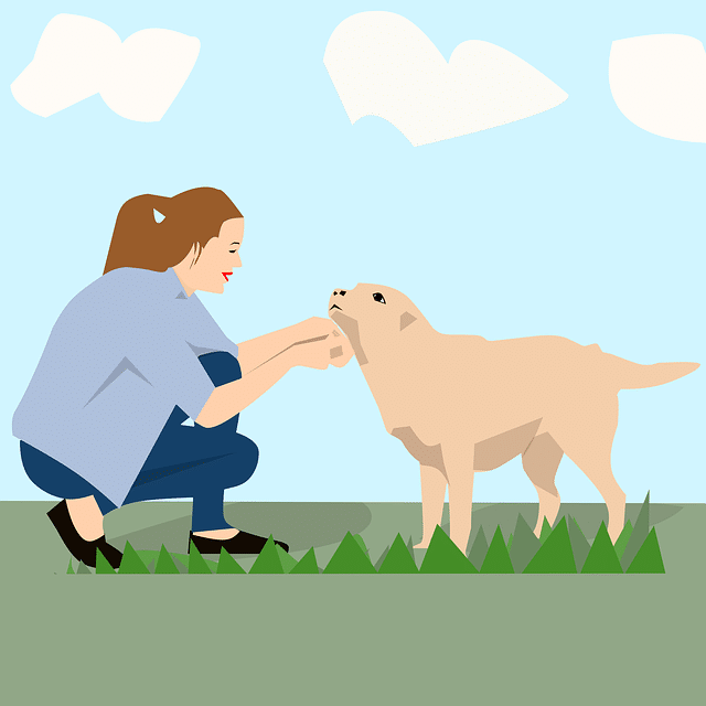 Dog Training - What Are the Three Ideas