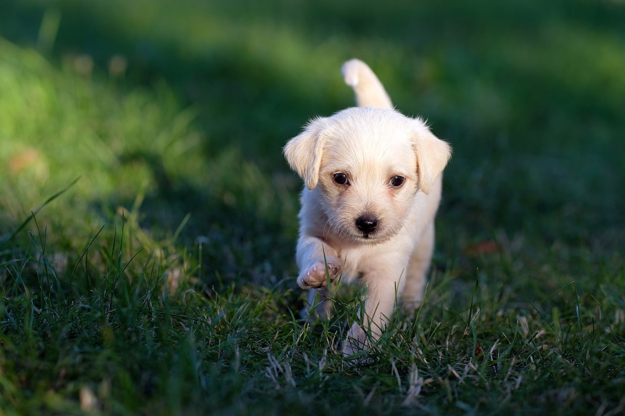 Tips For Training A Puppy
