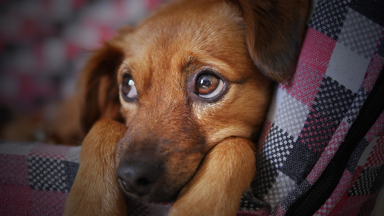 How to Deal With Dogs Naturally and Effectively